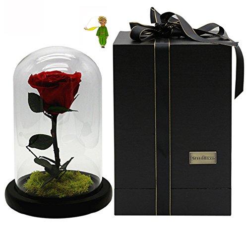Yacn Beauty en het Beest roos Onsterfelijke &Nooit Verdroogde Verse Rozen&Bewaarde Verse Rose Bloem Hoofd Bedekt door Glazen Schaduw als Unieke of Moeders'Day of Huwelijk Verjaardag
