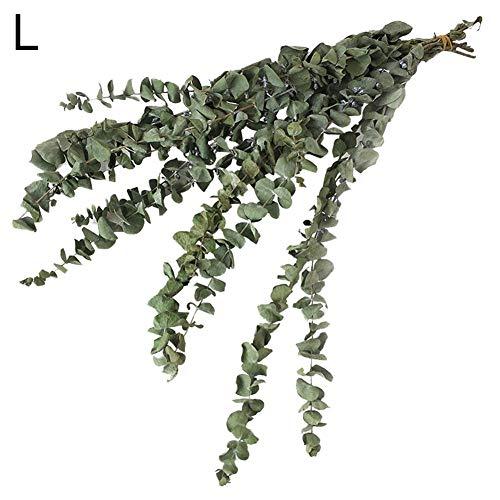 10 Ramas de eucalipto Natural secas de Ramas de Flores de Profusion Ci