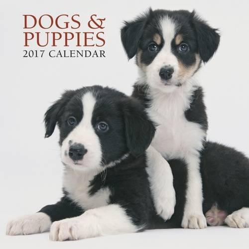 2017 Calendar: Dogs & Puppies