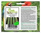 Pezzi - 8x Zucchina Partenon F1 Semi Ortaggi Seme Giardino Frisch Semi K215 - Seeds Plants Shop Samenbank Pfullingen Patrik Ipsa