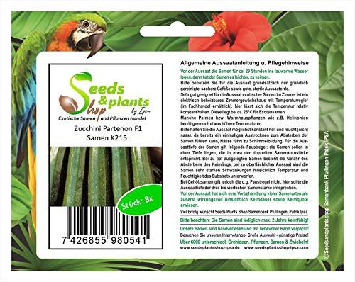 Stk - 8x Zucchini Partenon F1 Gemüsesamen Samen Garten Frisch Saatgut K215 - Seeds Plants Shop Samenbank Pfullingen Patrik Ipsa