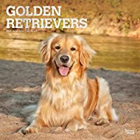 ゴールデンレトリバー Golden Retrievers 2021 カレンダー犬