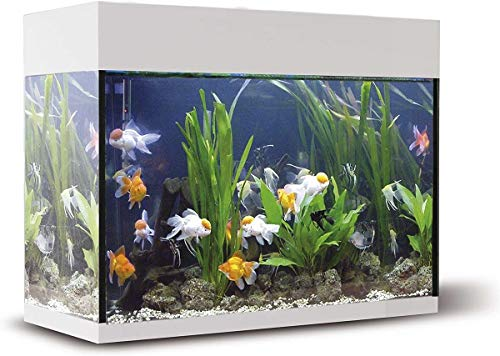 ICA KXI45B Kit Aqualux con Filtro Interior, Crema