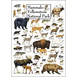 Earth Sky & Water Poster - Mammals of Yellowstone National