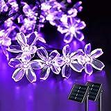 JMEXSUSS 2 Pack Purple Solar Lights, 30.6FT 50 LED Each Solar Flower String Lights Outdoor Waterproof, Solar Cherry Blossoms Lights for Garden Halloween Decorations
