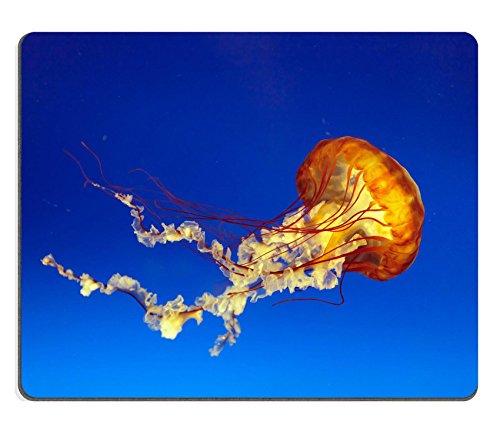 Liili Mauspad Naturkautschuk Mousepad orange Bell Quallen in Osaka Aquarium Japan Bild-ID 12776924