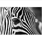 Muzimuzili Pósteres e Impresiones artísticos de Pared con Cabeza de Cebra en Blanco y Negro Cuadro de Arte Animal Pintura en Lienzo para la decoración del hogar de la Sala de Estar 50x70cm sin Marco