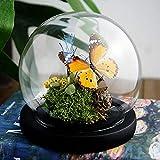 Especímenes de mariposa hechos a mano de flores inmortales,Espécimen de Insecto,Espécimen de Mariposas,adornos de bolas de vidrio,regalos,regalos del día de San Valentín,regalos del día del maestro
