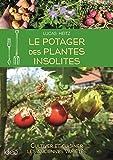 Le potager des plantes insolites