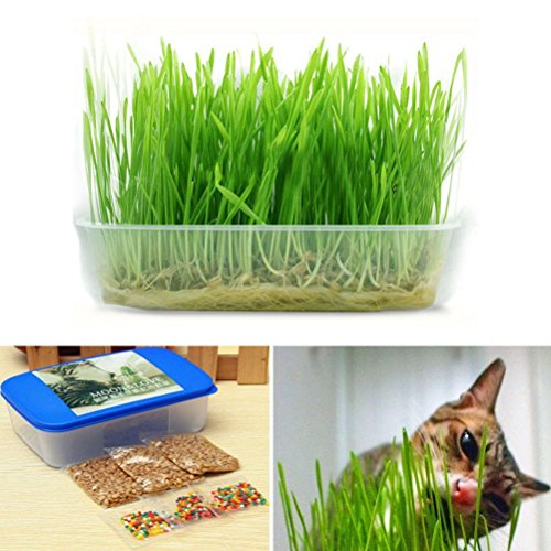 1 Set Vente chaude, Vert digestif Cristal cataire herbe sain Traiter plante double cataire bonsaïs herbe graine chat chaton