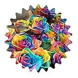 Rainbow Rose / Unicorn Rose / Colorful Rose / aprox. 50 semillas / semillas de rosas / regalo para amantes / regalo de cumpleaños