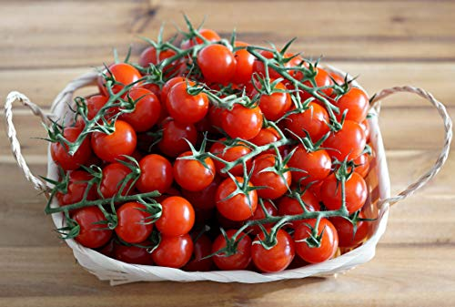 Mexikanische Honigtomate - Tomate - super süß und ertragreich - 10 Samen