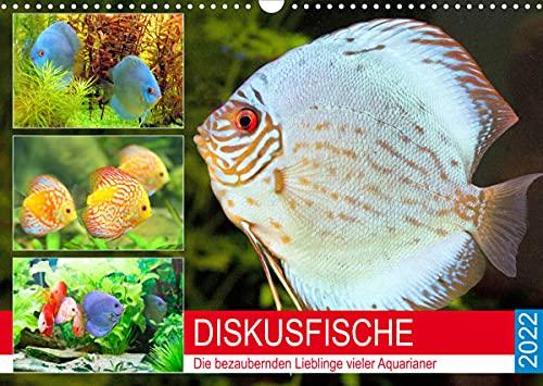 Diskusfische. Die bezaubernden Lieblinge vieler Aquarianer (Wandkalender 2022 DIN A3 quer)