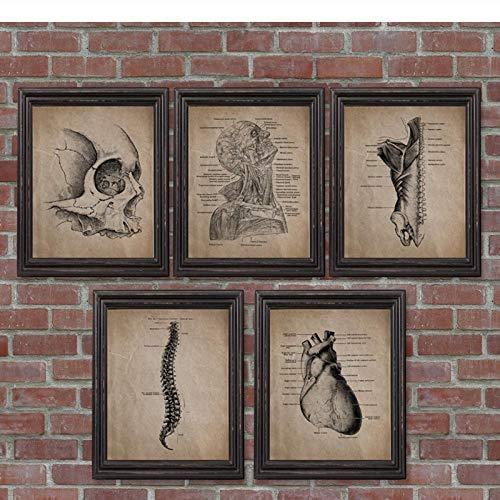 LLXHGMenschliche Anatomie Skelett Drucke Und Poster Anatomische Schädel Wandkunst Leinwand Gemälde Vintage Poster Arztpraxis Dekoration-40X50Cmx5 Kein Rahmen
