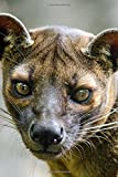 A Fossa Looking Out in Madagascar Journal: Take Notes, Write Down Memories in this 150 Page Lined Journal