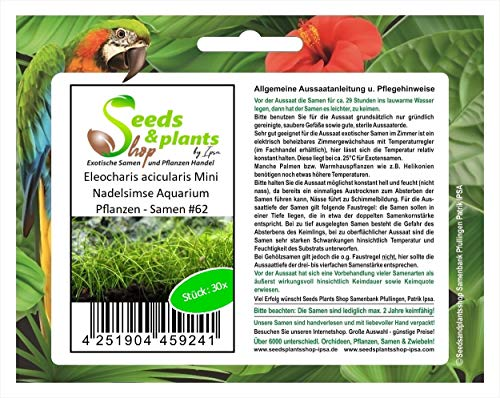 Stk - 30x Eleocharis acicularis Mini Nadelsimse Aquarium Pflanzen - Samen #62 - Seeds Plants Shop Samenbank Pfullingen Patrik Ipsa