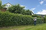 25st. Liguster ovalifolium 70-100cm Ligustrum ovalifolium reine Pflanzhöhe Wurzelware Heckenpflanzen Gartenhecke