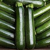 Semi Pacchetto: Nuovi Semi di Verdure Pacchetto di zucchine 'Midnight F1' Seed Re qualità