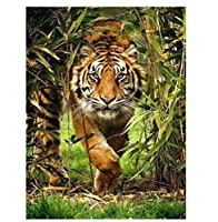 油絵 数字キットによる絵画 塗り絵 アニマルタイガー- DIY絵 デジタル油絵40x50 センチ (diyの木製フレーム)