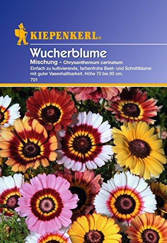 Sperli Blumensamen Wucherblume Carinatum, Mischung, grün