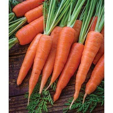 500pcs ronde carotte Productives Sweet Seeds carotte Graines Bonsai plantes Nutritif de fruits de légumes pour jardin Cour multicolore