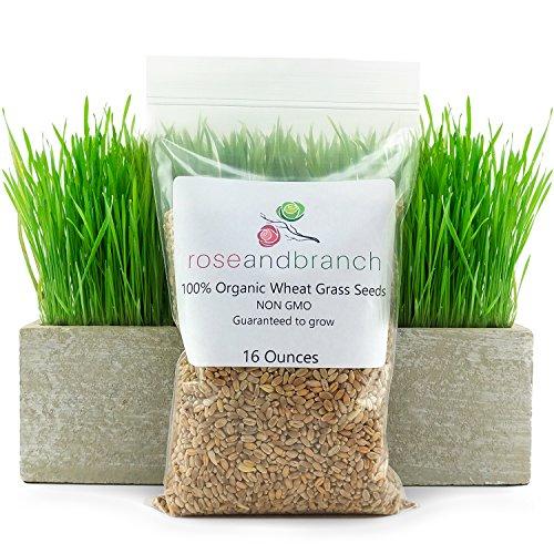Organic Wheat Grass Seeds, Cat Grass Seeds, 16...