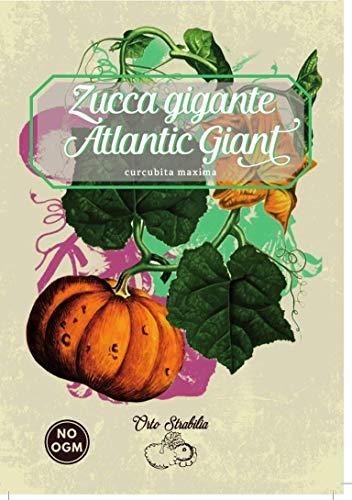zucca gigante,atlantic giant,cucurbita maxima,gr 3,semi rari,semi strani, orto strabilia