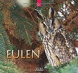 Eulen: Original Stürtz-Kalender 2020 - Mittelformat-Kalender 33 x 31 cm
