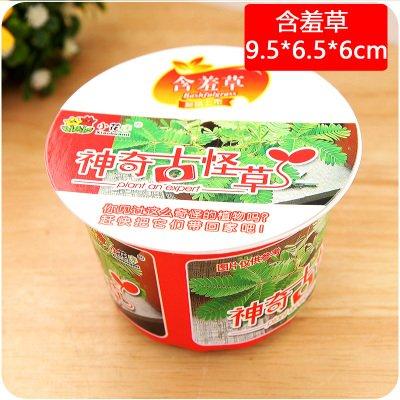 Plante Vert menthe Graines de légumes balcon en pot aromatique Graines de menthe poivrée About F4772, Mimosa pudica, As Show in Description