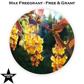 Free & Grant