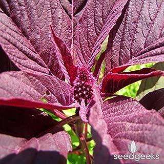 Red Garnet Amaranth Heirloom Seeds - 250 Seeds