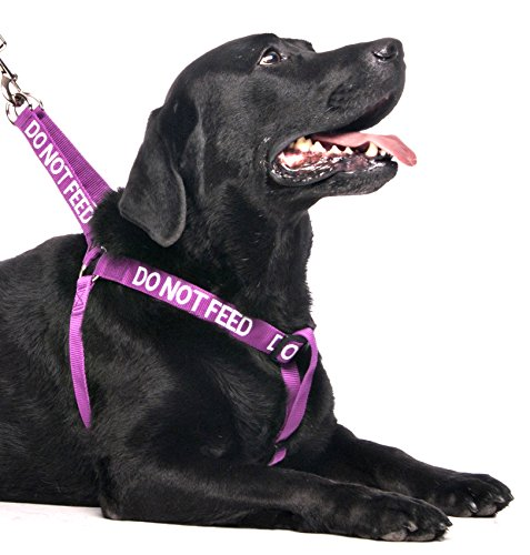 Dexil Limited Do Not Feed Purple Color Coded L XL Non Pull Dog Harness Prevents Accidents By Warning Others of Your Dog in Advance