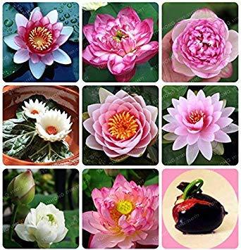 VISA STORE Samen: Samen für Töpfe 15 Samen- Gewächshaus (9 Packets) Garten Samen Samen von