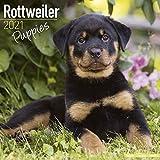 Rottweiler Puppies 2021 Calendar | Square Puppy Wall Calendar | 16 Month