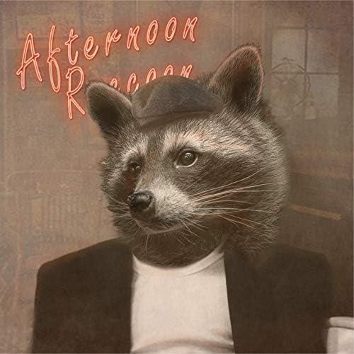Afternoon Raccoon