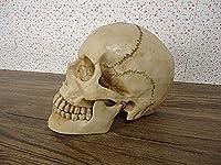 2020 Latest Design 生産スカルミニヒューマンハロウィーン小道具の頭蓋骨頭部の頭蓋骨頭蓋骨