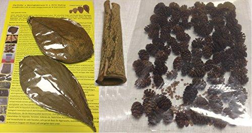 catappa-leaves TopSellerSet Wasseraufbereitung für Gesunde Fische + Garnelen (20 Seemandelbaumblätter, 50gr Erlenzapfen, Rindenröhre)