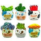 Sixdrop 2.7 Inch Cow Succulent Pots | 6 Succulent Pots with Drainage | Ceramic Animal Planter Pots for Cacti | Cow Planter Set | Cow Decorative Succulent Pots for Home, Office, Windowsill