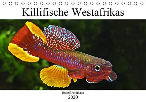 Killifische Westafrikas (Tischkalender 2020 DIN A5 quer): Faszination der Farben: Killifische (Monatskalender, 14 Seiten ) (CALVENDO Tiere)