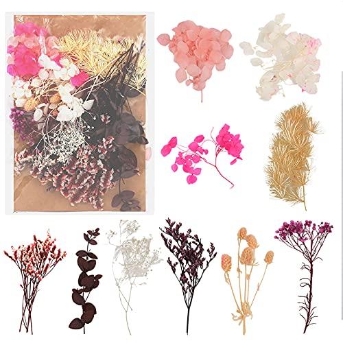 Floepx Getrocknete Blumen,Natürliche...