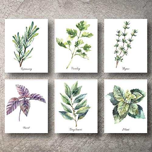 Botanical Prints Wall Decor Kitchen Art Herbs Leaves Set UNFRAMED Pictures 6 PIECES Nature Floral herb Plant Flower Green Small Botanical Prints Wall Art Vintage Print Poster (5x7)