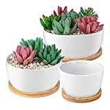 HOMENOTE 6/5/3.8 inch White Succulents Pots with Drainage Bamboo Trays Round Ceramic Succulent planters Indoor, Set of 3
