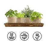 Zoom IMG-2 kit vintage piante aromatiche timo