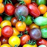 100 piezas de semillas de tomate de cereza arcoíris de semillas de tomate enano de herencia colorida para plantar el jardín de su casa