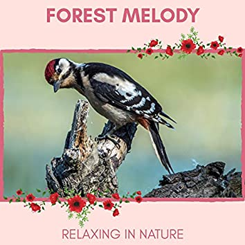 Forest Melody - Relaxing in Nature