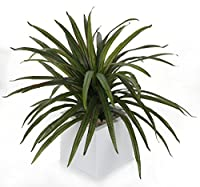 """Highly realistic vibrant foliage Made using the finest materials and the most advanced manufacturing techniques to ensure botanical accuracy UV Resistant Approximate Height 2ft 1"""" (64cm) The plant is supplied in a standard plastic pot - Please note t..."""