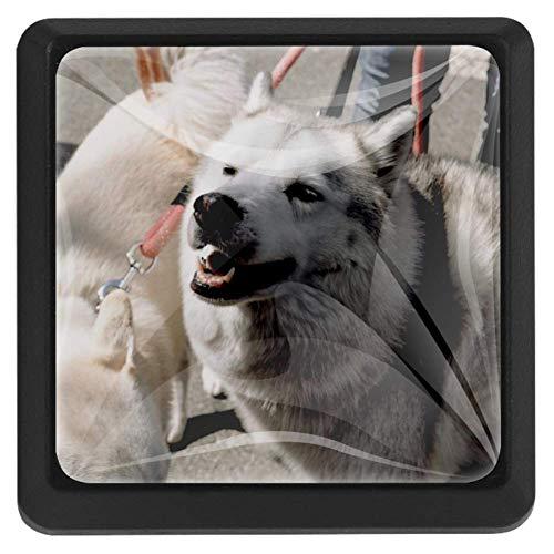 Vierkante ladeknoppen, 3 Pakketten 37mm Trekhendels met Corgi Opzoeken, Gebruikt voor Slaapkamer Dressoir Deur Kast Keuken Modern design 37x25x17mm/1.45x0.98x0.66in Happy Dog