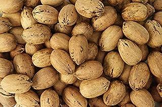 Fresh Texas Pecans In Shell, 5 Pound Bag | Millican Pecan since 1888 | San Saba, Texas