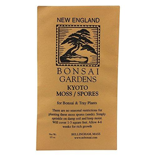 Bonsai Tree Moss Spores - Kyoto Japan from BonsaiOutlet