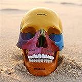 Cráneo De Anatomía Humana, Logotipo En Color, Herramientas De Enseñanza Médica, Juguetes Tangram